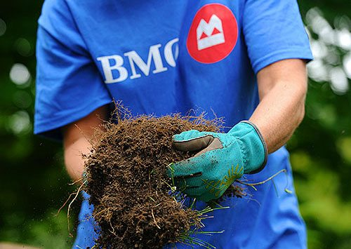 Bank of Montreal employee wear corporate t-shirt holding dirt in gloved hands