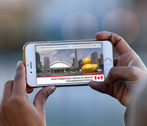 Picture of giant yellow rubber duck in Toronto lake displayed on a mobile phone.
